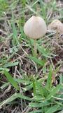 自然蘑菇庭院 库存图片