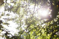 自然被弄脏的背景,抽象绿色bokeh背景 库存图片