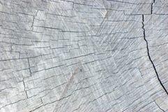 自然被风化的灰色树桩裁减纹理,大详细的水平的背景样式 免版税库存照片