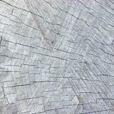 自然被风化的灰色树桩裁减纹理,大详细的织地不很细样式背景,老年迈的树 图库摄影