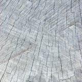 自然被风化的灰色树桩裁减纹理,大详细的背景,垂直的织地不很细镇压样式宏指令特写镜头 库存图片