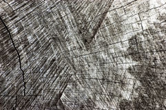 自然被风化的灰色树桩裁减纹理,大详细的老年迈的灰色木材背景水平的宏观特写镜头,深黑色 免版税图库摄影