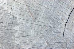 自然被风化的灰色树桩裁减纹理,大详细的背景水平的灰色样式 图库摄影