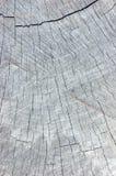 自然被风化的灰色树桩裁减纹理,大详细的织地不很细垂直的背景样式 库存照片