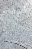 自然被风化的灰色树桩裁减纹理,大详细的织地不很细垂直的背景 库存图片