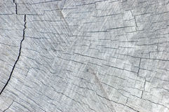 自然被风化的灰色树桩裁减纹理,大详细的织地不很细水平的样式背景 库存照片