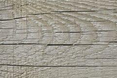 自然被风化的灰色Tan灰褐色乌贼属木板,破裂的粗纹木纹理大详细的老年迈的灰色木材背景 免版税库存图片