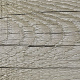 自然被风化的灰色Tan灰褐色乌贼属木板,破裂的粗纹木纹理大详细的老年迈的灰色木材背景 图库摄影
