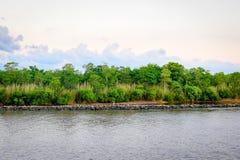 自然路易斯安那多沼泽的支流 库存图片