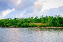 自然路易斯安那多沼泽的支流 库存照片