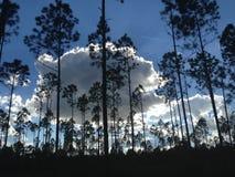 自然远足 免版税库存照片