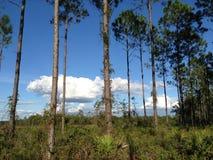 自然远足 免版税图库摄影