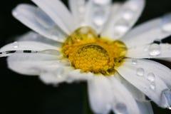 自然透镜 免版税图库摄影