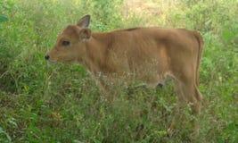 自然逗人喜爱的动物 免版税库存图片