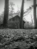 自然通过树 库存照片