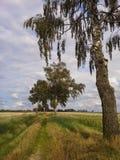 自然道路在北波兰 免版税库存照片