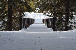 自然道路1 库存图片