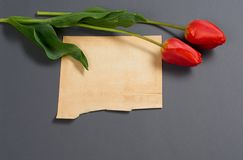 自然郁金香在深灰背景、老纸板料文本的-爱和假日概念开花 图库摄影