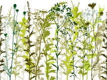 自然野生植物。 库存图片