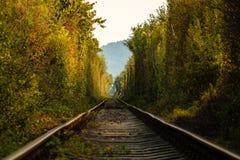 自然隧道 库存图片