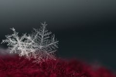 自然雪花特写镜头 冬天,冷 免版税库存照片
