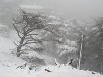 自然雪 库存照片