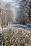 自然霜 免版税库存图片
