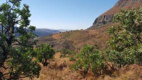 自然非洲 免版税库存照片
