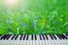自然音乐  在自然背景的钢琴钥匙  库存照片
