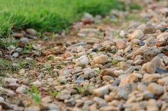 自然领域 图库摄影