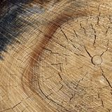自然颜色老木五谷正方形框架纹理关闭 免版税库存图片
