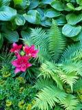自然颜色-百合 图库摄影