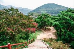 自然风景、山和树和花在Cheongpung文化遗产复合体,韩国 图库摄影