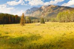 自然风景亚伯大西部加拿大班夫国家公园 免版税库存照片