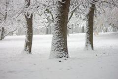 自然风景在森林里,当在雪的树 图库摄影
