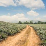 自然风景背景 免版税库存照片