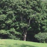 自然风景观点的密集的绿色树和草 免版税库存照片