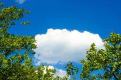 自然风景,包括在树背景的一朵云彩加冠 免版税库存图片