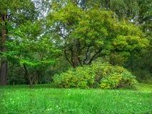 自然风景,日本庭院,莫斯科 免版税库存图片