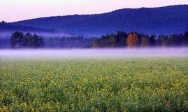 自然风景 免版税库存照片