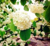 自然风景6 免版税库存照片