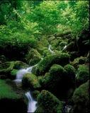 自然风景 图库摄影
