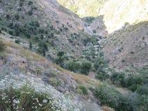 自然风景 库存照片
