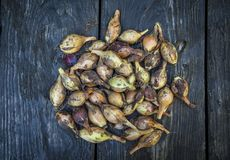 自然食物,在一张木桌上的黄色葱 库存照片