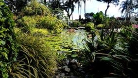自然鱼池庭院 库存照片