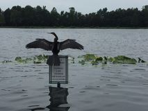 自然鸟 免版税库存照片