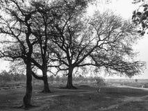 自然黑暗的树荫  库存图片