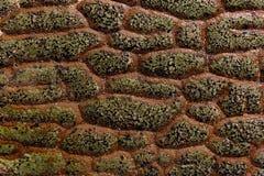 自然龙标度岩石纹理 图库摄影