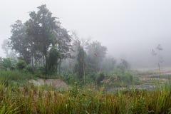 自然,在妥协的薄雾 库存照片