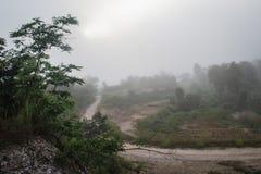 自然,在早晨薄雾 免版税库存图片